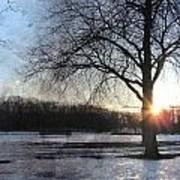 Winter Tree Sunset Poster