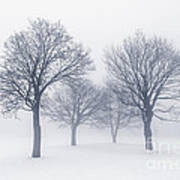 Winter Trees In Fog Poster