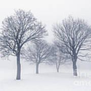Winter Trees In Fog Poster by Elena Elisseeva