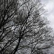 Winter Trees Number Three Poster