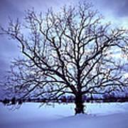 Winter Twilight Tree Poster
