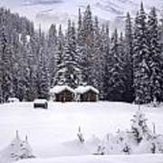 Forest Snow Blanketed Privies - Winter In Banff, Alberta Poster