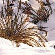 Winter Weeds Poster