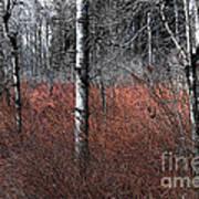 Winter Wetland I Poster