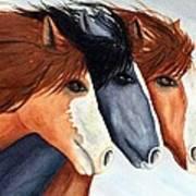 Horse Trio Poster