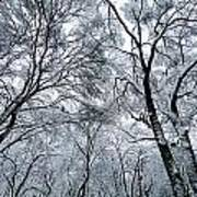 Winter Wonder Poster