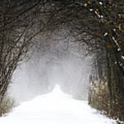 Winter Wonder Snow Tunnel Of Trees Poster