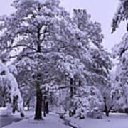Winter Wonderland 3 Poster by Mike McGlothlen