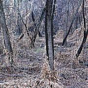 Winter Woods In Missouri 1 Poster