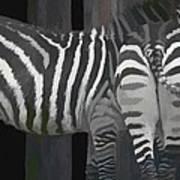 Winter Zebras Poster