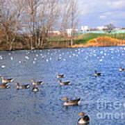 Wintering Birds - Mayesbrook Park Poster