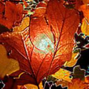 winters autumn in Pasadena Poster
