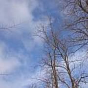 Winter's Blue Sky Poster