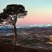 Winter's Dawn Poster