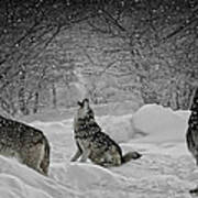 Winters Eve Howling Poster
