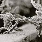 Winters Frost Poster by Karen Grist