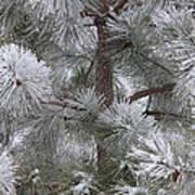 Winter's Gift Poster