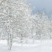 Winter's Glory - Grand Tetons Poster
