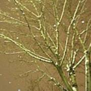 Winter's Golden Tree And Suspended Snow Poster