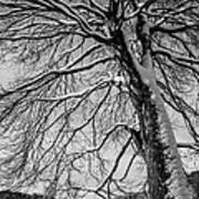Winters Tree Poster