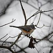 Winter's Tufted Titmouse Poster
