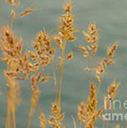 Wispy Grass Poster by Sarah Crites