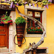 Wisteria And Yellow Wall In Alsace France Poster