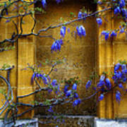 Wisteria Wall Poster