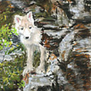 Wolf Pup Poster