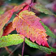Wonder Leaf Poster
