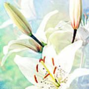 Wonderful Lilies Poster