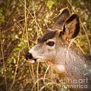 Wondering Deer Poster by Kimberly Maiden