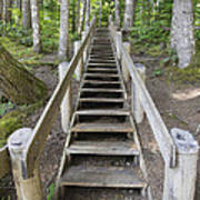 Wood Staircase In Hiking Trail Poster