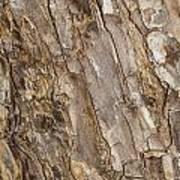 Wood Textures 4 Poster