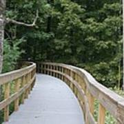 Wooded Walkway Poster
