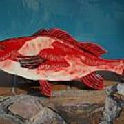 Wooden Red Snapper Poster by Val Oconnor