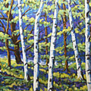 Woodland Birches Poster