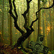 Woodland Burial Poster