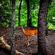 Woodland Deer Poster
