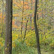 Woodland Interior Poster