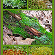 Woodland Mosses Poster