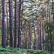 Woodland Path Poster by David Isaacson