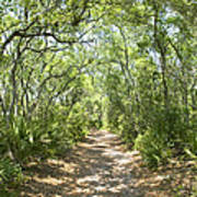 Woodland Path Poster by Glennis Siverson