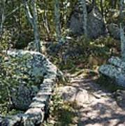 Woodland Path With Stone Wall Poster