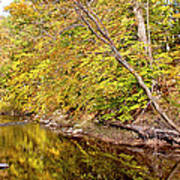 Woodland Stream Early Autumn Montgomery County Pennsylvania Poster