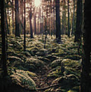 Woodland Trees Poster