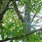 Woodpecker Tree Art Poster
