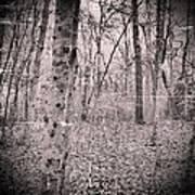 Woods Darkly Poster