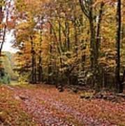 Woods Walk Poster