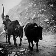 Work Hard Tamang People Langtang Nepal Poster